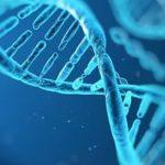 В КОЛБАСЕ «МАВРА» НАШЛИ ДНК СОИ И ПТИЦЫ, КОТОРЫХ ТАМ БЫТЬ НЕ ДОЛЖНО
