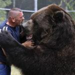 Дирекция парка «Ергаки» призвала туристов не провоцировать медведей