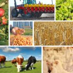 В Хакасии продолжается рост сельхозпроизводства