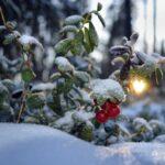 В Хакасию пришла ранняя зима
