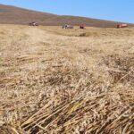 В отдаленных районах Хакасии продолжается уборка урожая